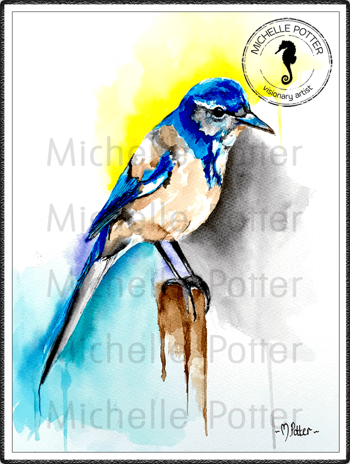 Commissioned_Art_Paints_Michelle_Potter_Bird_Western_Scrubjay_Large
