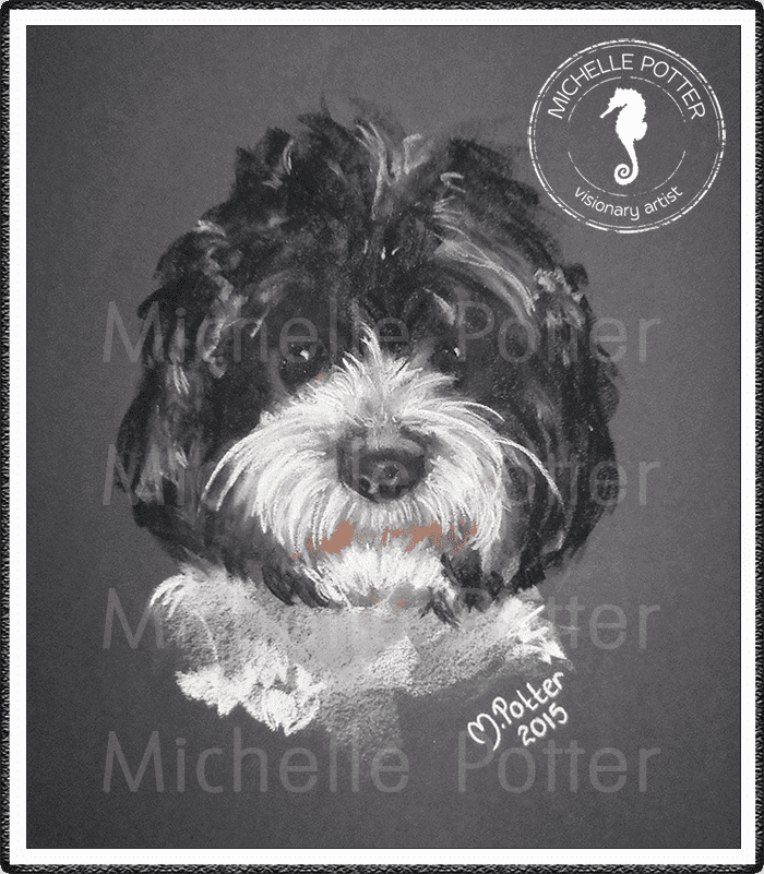 Commissioned_Art_Pastels_Michelle_Potter_Dog_Oreo_Large