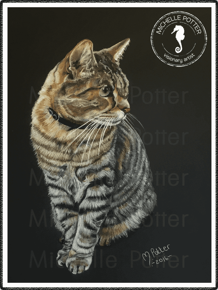 Commissioned_Art_Pencils_Michelle_Potter_Cat_Benjamin_Large