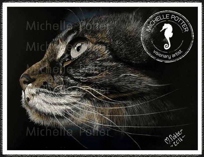 Commissioned_Art_Pencils_Michelle_Potter_Cat_Mr_Fluffy_Large