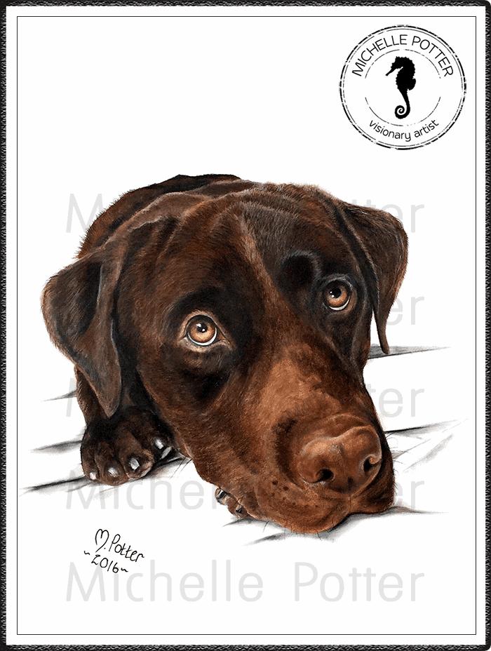 Commissioned_Art_Pencils_Michelle_Potter_Dog_Cooper_Large