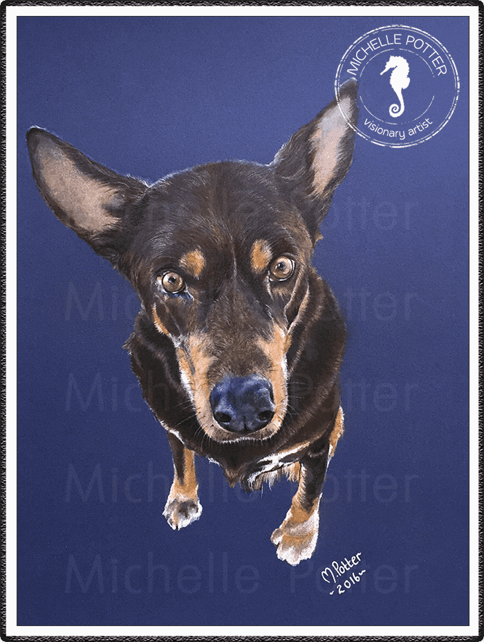 Commissioned_Art_Pencils_Michelle_Potter_Dog_Harry_Large