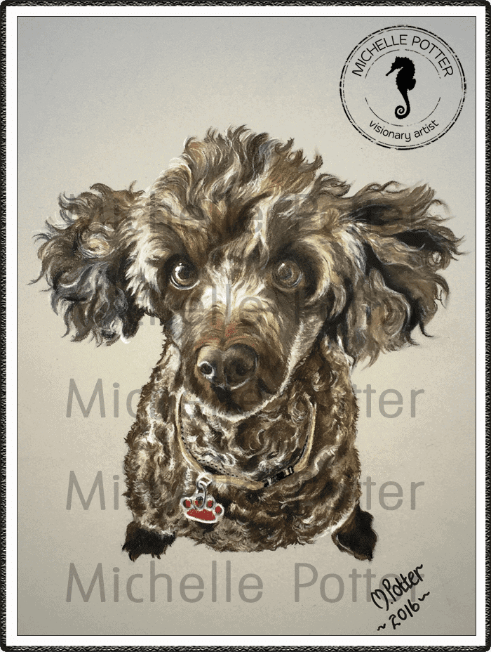 Commissioned_Art_Pencils_Michelle_Potter_Dog_Poodle_Bella_Large