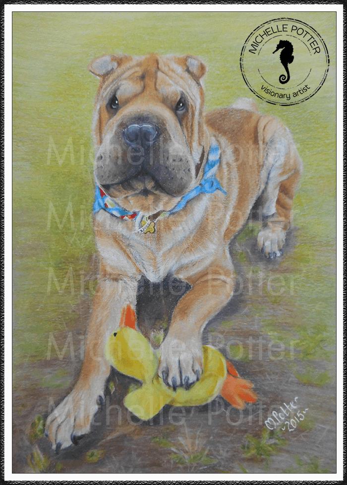 Commissioned_Art_Pencils_Michelle_Potter_Dog_Sharpei_Bundles_Large