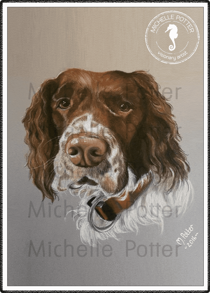 Commissioned_Art_Pencils_Michelle_Potter_Dog_Springer_Spaniel_Dexter_Large