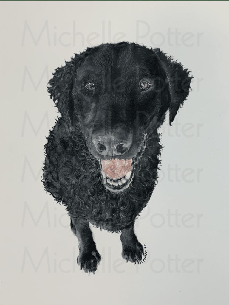 Loki Pet Portrait Watermarked