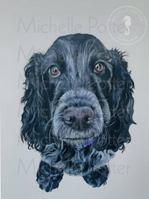 Lucy Spaniel CPencil Watermarked